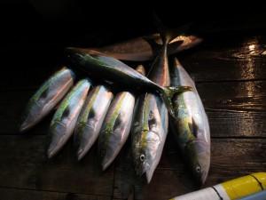 0054 11月7日午後の釣果