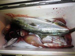 0057 11月13日午後の釣果