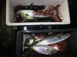0072 11月8日午後の釣果
