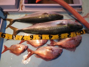 0031 12月4日午後の釣果