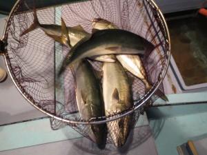 004 12月3日午後の釣果