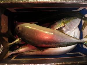 005 12月3日午後の釣果