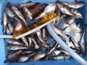 0012 1月10日午前の釣果
