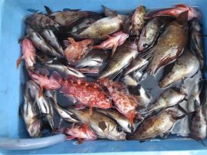 0028 1月29日午前の釣果