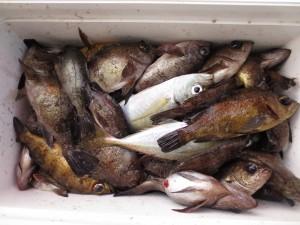 004 1月7日午前の釣果