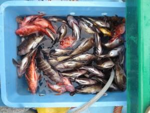 0047 1月28日午前の釣果