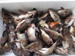 0049 1月31日午前の釣果