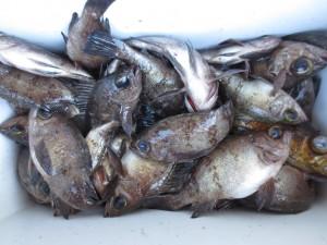 0053 1月13日午前の釣果