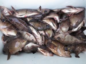 0057 1月29日午前の釣果