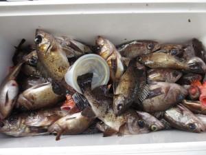 008 1月21日午前の釣果