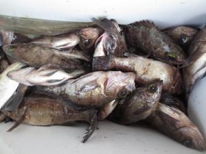 0015 2月17日午前の釣果