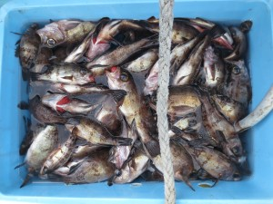 003 2月3日午前の釣果