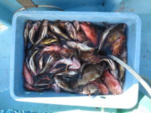 0031 2月6日午前の釣果
