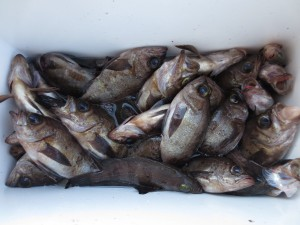 0071 2月6日午前の釣果