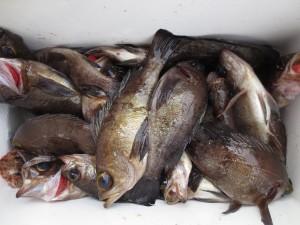 0075 2月25日午前の釣果