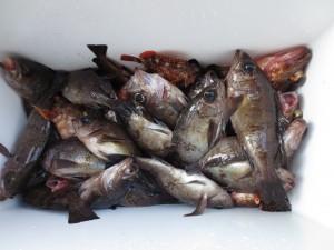 0081 2月9日午前の釣果