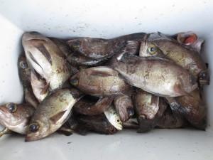 005 3月3日午前の釣果