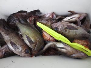 0051 3月7日午前の釣果