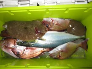 004 4月30日午後の釣果