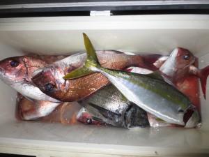 0042 5月12日午後の釣果