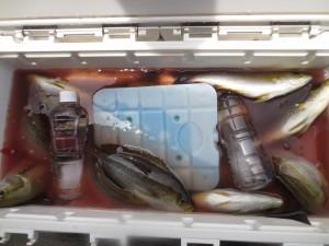 0037 6月24日午前の釣果