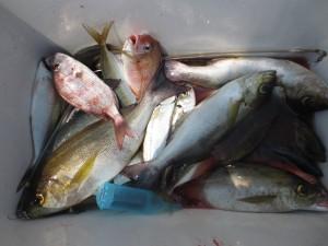 0016 1月19日午前の釣果