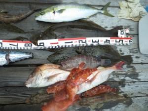003 8月10日午前の釣果