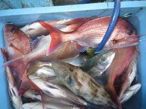 0012 9月19日午後の釣果