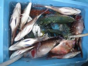 0013 9月24日午後の釣果