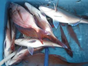 0022 9月19日午後の釣果