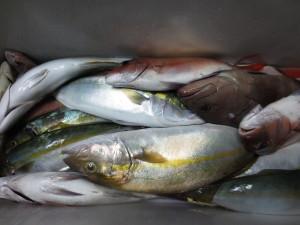 0043 9月23日午後の釣果