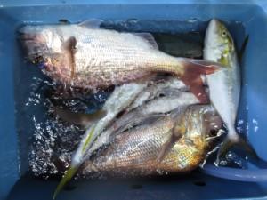 0011 10月9日午後の釣果