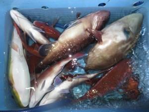 0019 10月19日午後の釣果