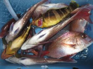 00310 10月21日午後の釣果