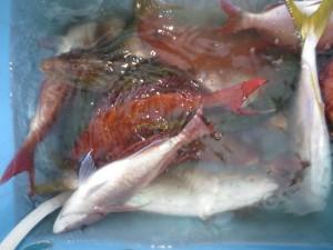 004 10月8日午後の釣果