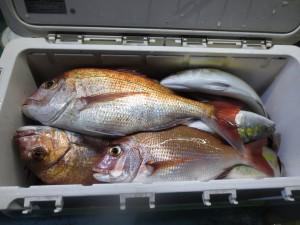 0041 10月9日午後の釣果