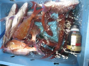 0048 10月23日午後の釣果