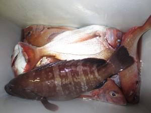 0055 10月26日午後の釣果