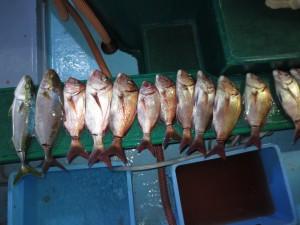 0071 10月21日午後の釣果