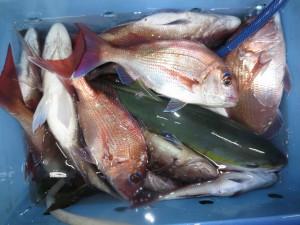 0011 11月6日午後の釣果