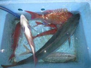 00111 11月25日午後の釣果