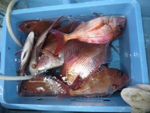 0012 11月7日午後の釣果