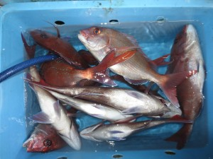 0035 11月11日午後の釣果