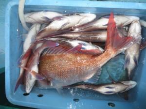0041 11月5日午後の釣果