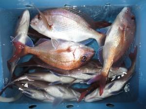 00410 11月18日午後の釣果