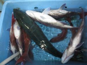 0011 12月1日午後の釣果