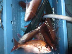 0012 12月3日午後の釣果
