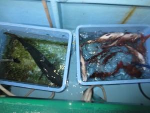 0023 12月6日午後の釣果