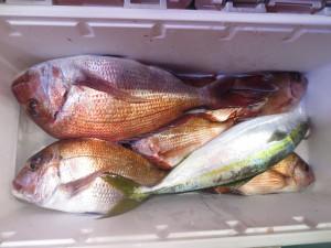 0042 12月3日午後の釣果
