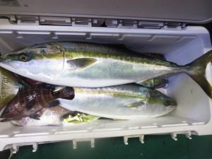 0052 12月3日午後の釣果